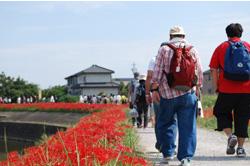 彼岸花の咲き乱れる川沿いを歩きます。