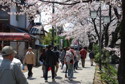 八剱中児童遊園~桜まつり会場