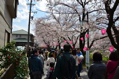 桜まつり会場~名鉄犬山線岩倉駅