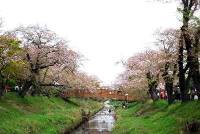 川の両岸にソメイヨシノが植えられた、岡崎を代表する桜の名所です。