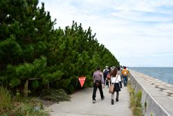 高架下を抜けると、松の木が立ち並ぶ道が続きます。