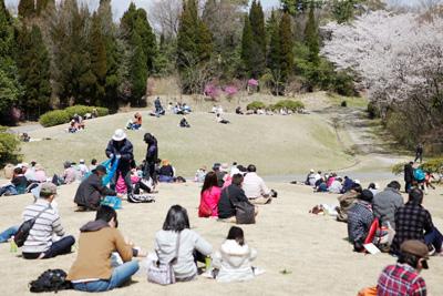 春の日差しの下、お弁当を広げて休憩するには最適の植物園・広芝生。