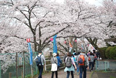 堀尾跡公園から、五条並木を歩きます。