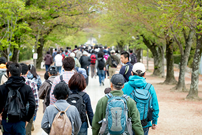 豊川公園(諏訪の桜トンネル)
