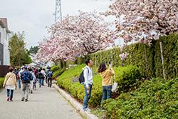 道の途中で見事に咲き誇る花を見つけ、思わず足が止まります。