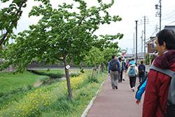 川沿いの菜の花を楽しみながら進んでいきます。