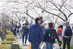 再び桜並木が待つ川沿いへ。春の陽気に包まれながら、楽しく進みます。